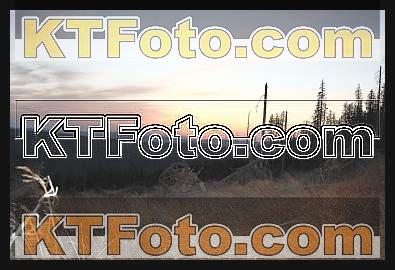 Foto 1301865