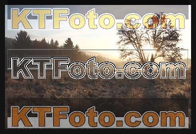 Foto 1301878