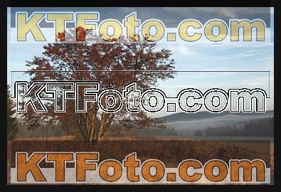 Foto 1301882