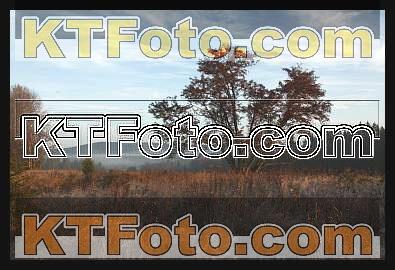 Foto 1301883