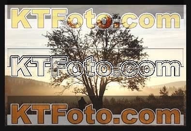 Foto 1301890