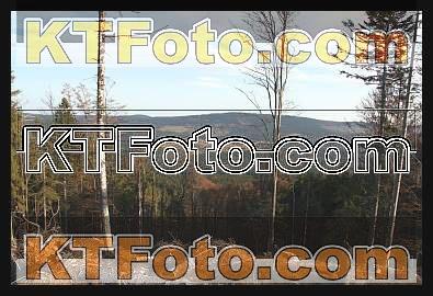 Foto 1301905