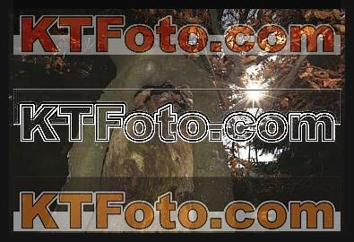 obrázek 1301911
