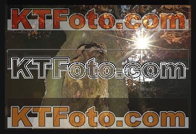 Foto 1301912