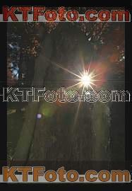 obrázek 1301915