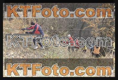 obrázek 1313737