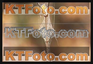 obrázek 1310789