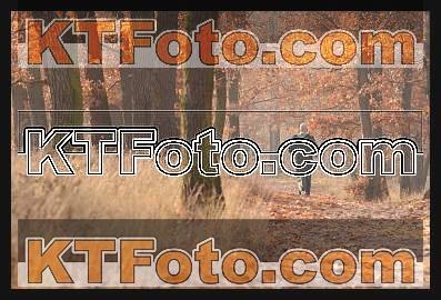 Foto 1308839