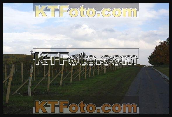 Foto 1972425